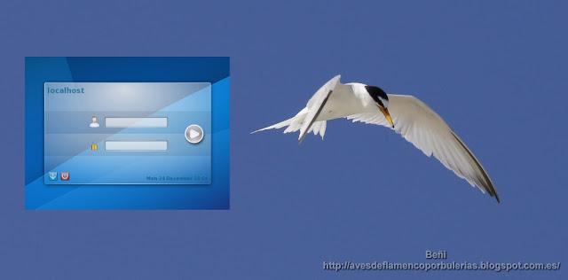 Despues de instalar Debian Buster 10: configuración e